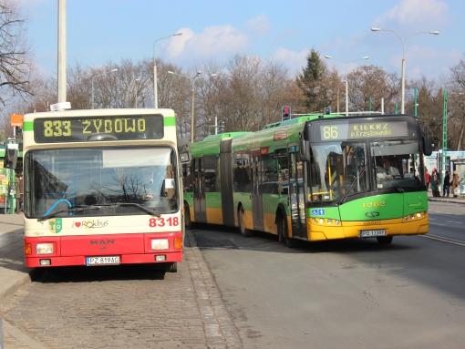 MAN NL202 i Solaris Urbino 18 na pętli Ogrody w Poznaniu